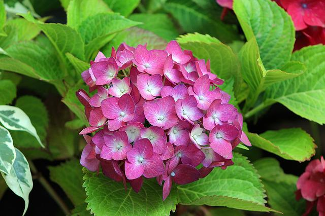Foto Gratis: Plantas, Flores, Primavera