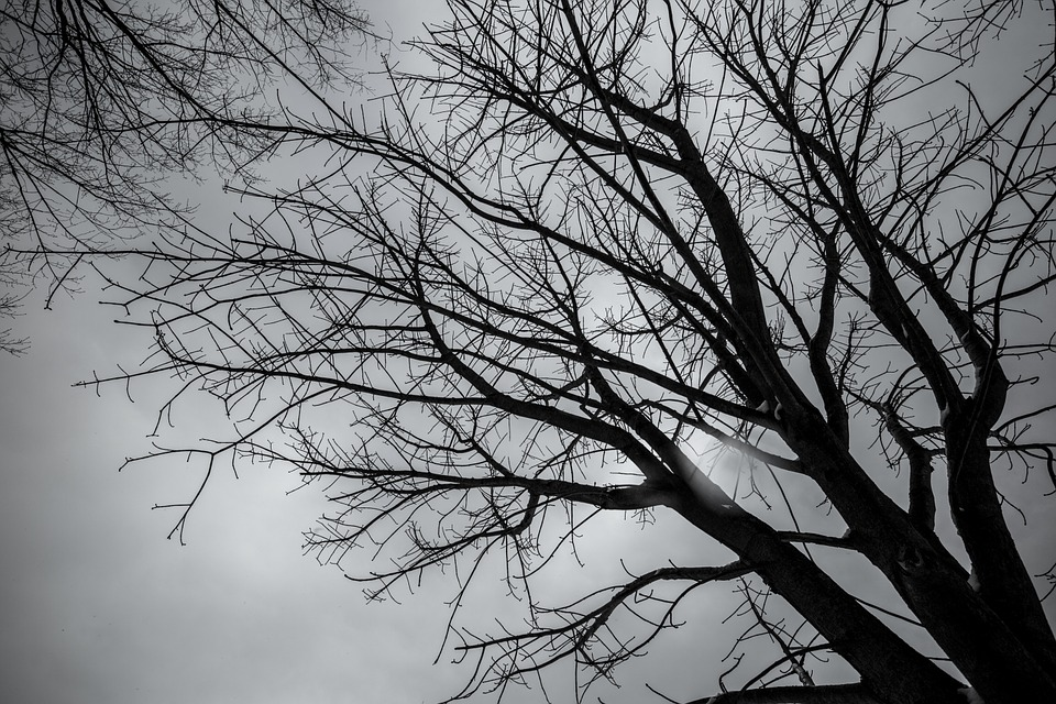 arbre hiver japon noir et photo gratuite sur pixabay. Black Bedroom Furniture Sets. Home Design Ideas