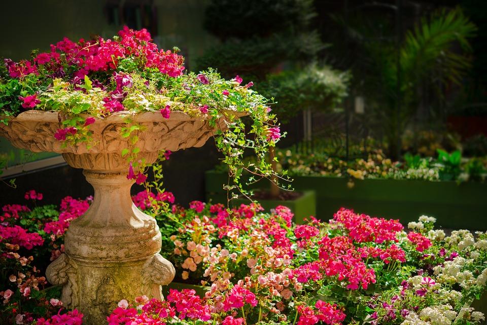 Natur, Garten, Blumen, Pflanzen, Blüten, Sommer, Grün