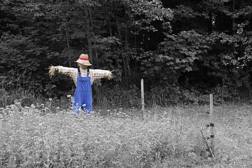 Scarecrow, Nature, Garden, Flowers