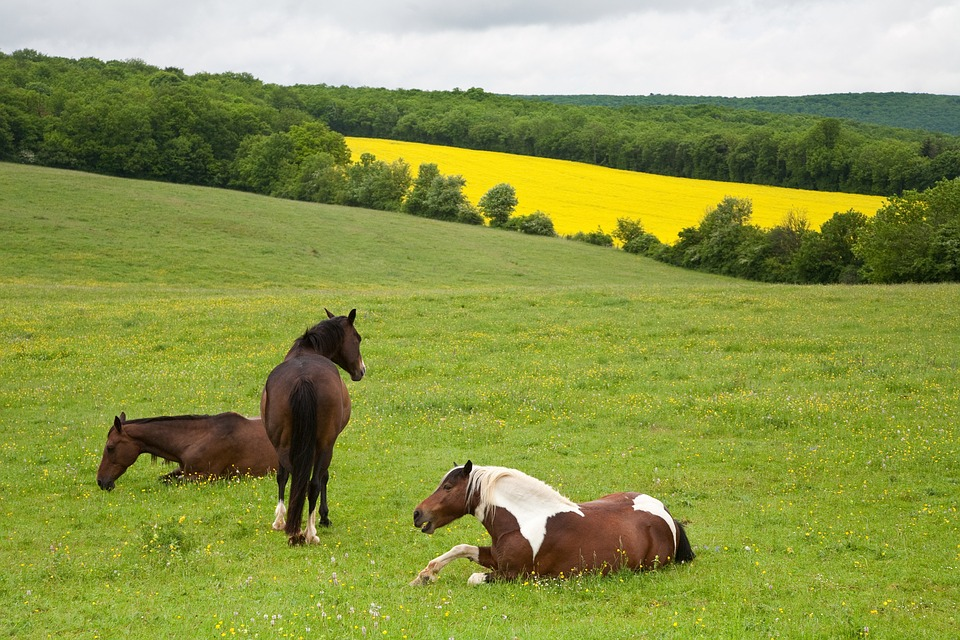 Free Photo: Horses, Field, Flowers, Grass