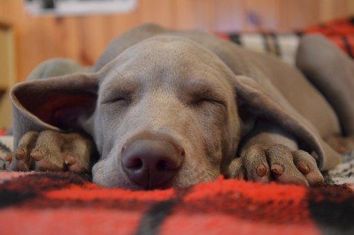 Hond, Puppy, Snuit, Dier, Tederheid