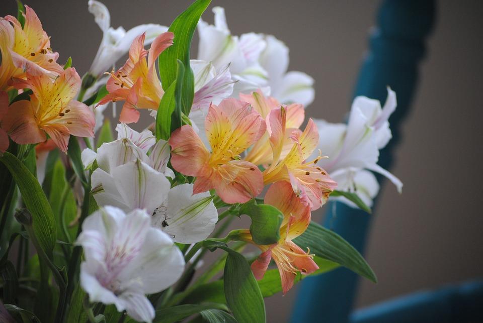 Kostenloses Foto Blumen, Orange, Weiß, Pflanze