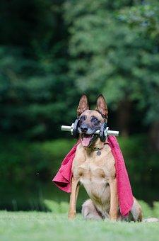 Trick, Dog Trick, Malinois
