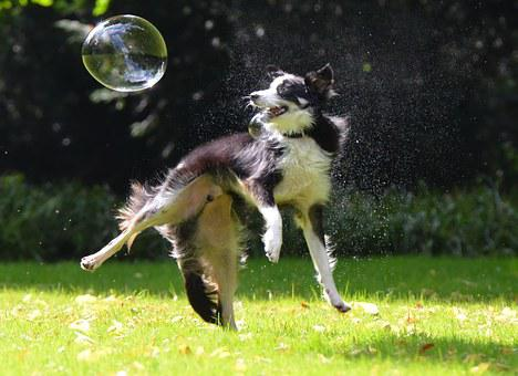 Soap Bubbles, Dog