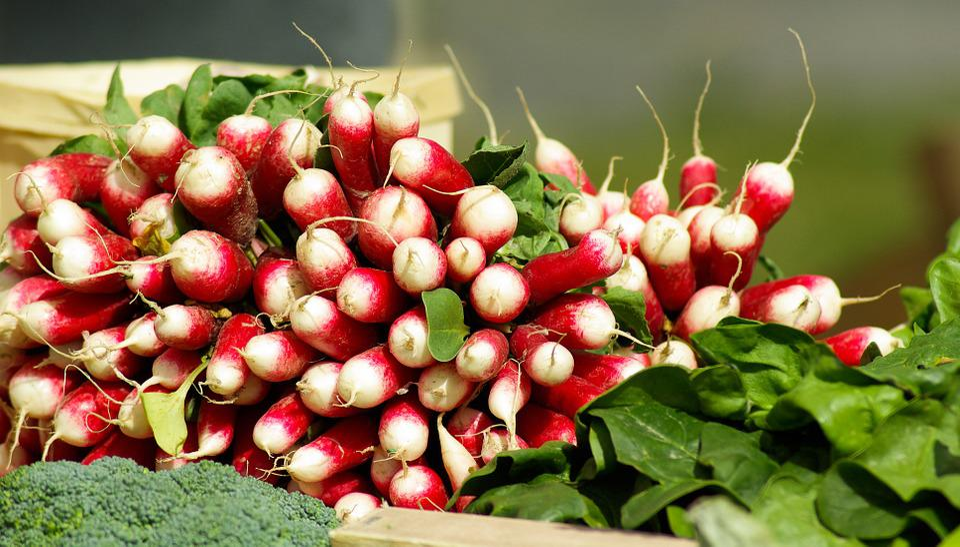 Legumes, Rabanete, Vitaminas, Jardim