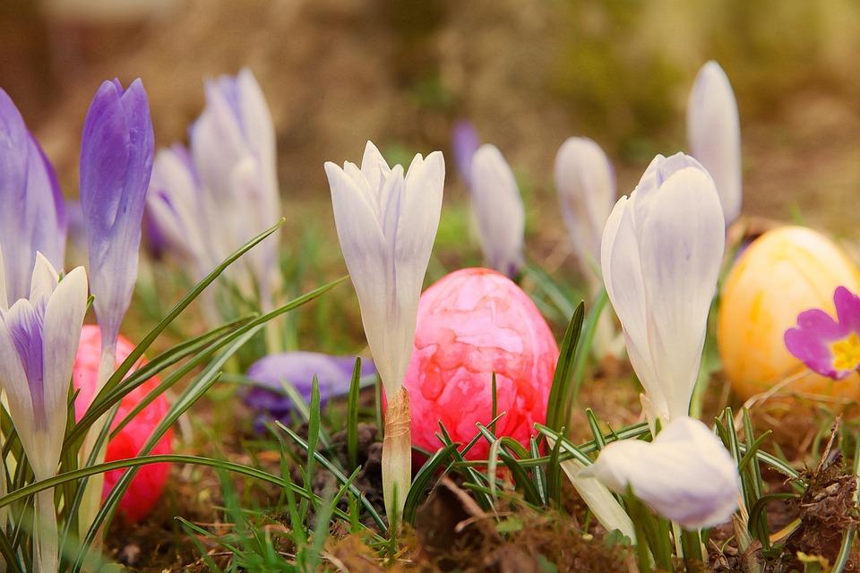 Easter Crocus Meadow Free Photo On Pixabay