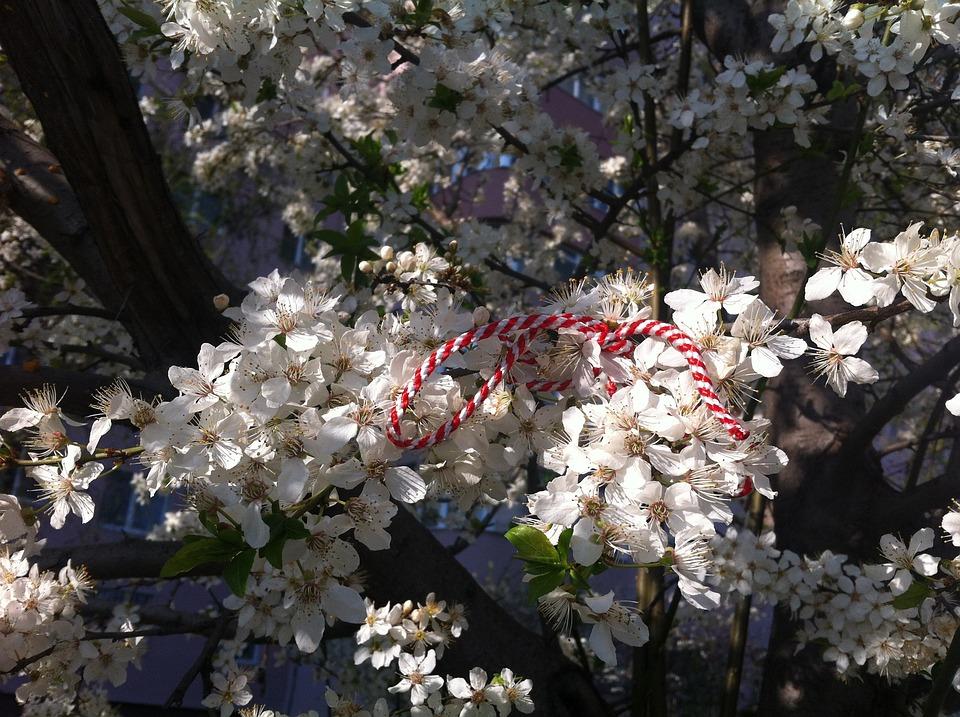 15 Martie Image: Free Photo: Martisor, Spring, Flowers