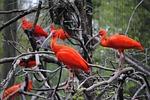 orange, birds, nature