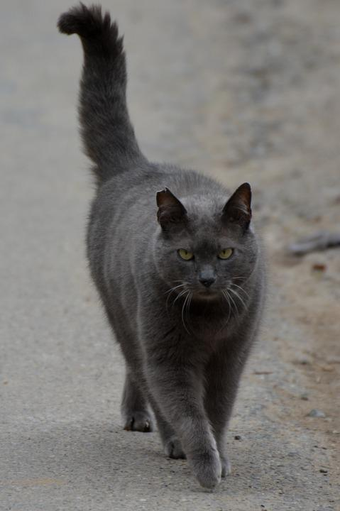 Gatto Gatti Animale Foto Gratis Su Pixabay