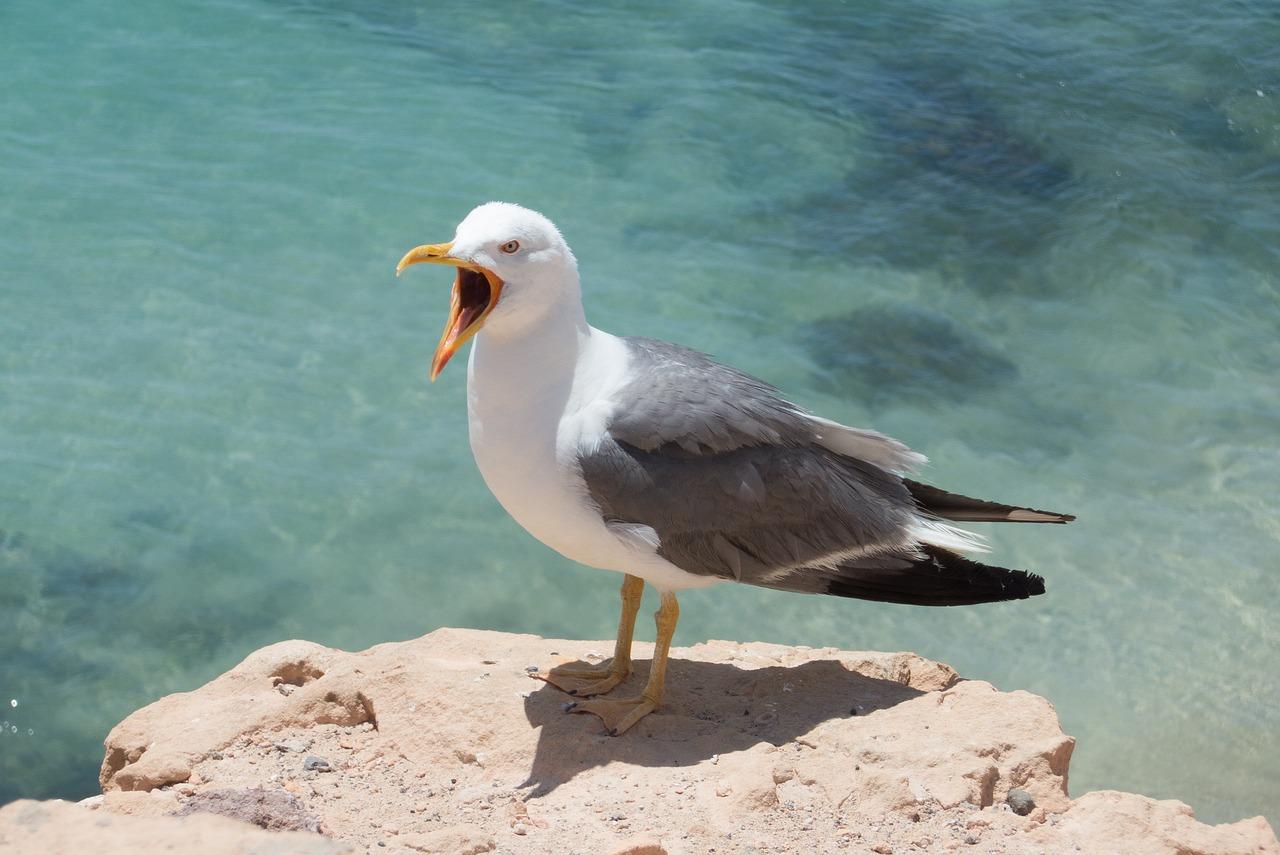 Фото аиста птицы высоко