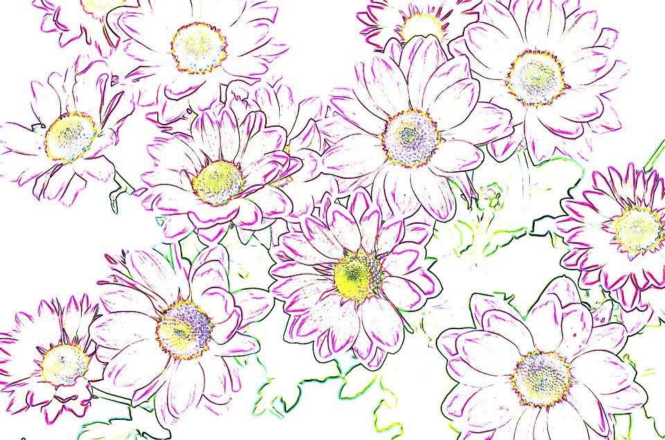 Sfondo Fiori Viola Immagini Gratis Su Pixabay