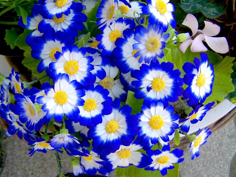 Fiori di primavera per qualsiasi giardino idee per - Fiori di giardino ...