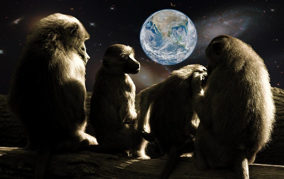 猿の惑星 類人猿 ヒヒ Pixabayの無料写真