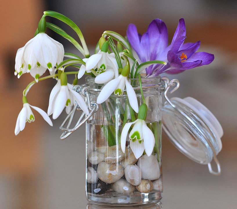 free photo snowdrop lily of the valley free image on. Black Bedroom Furniture Sets. Home Design Ideas