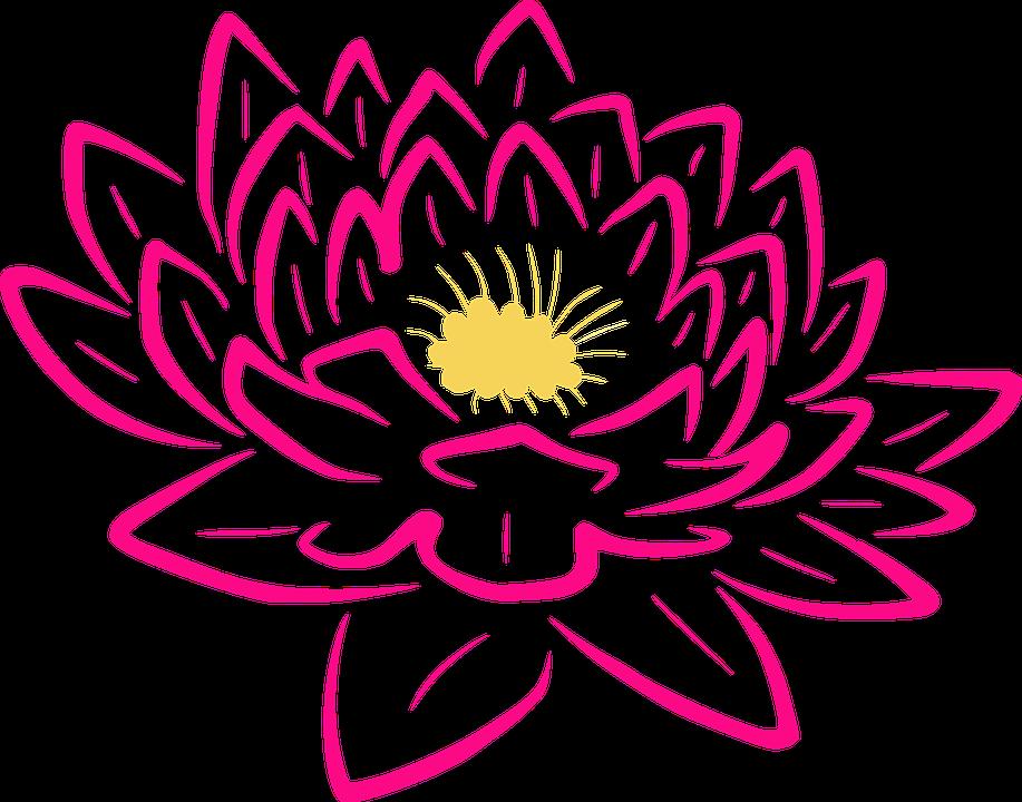 pink rose flower images hd