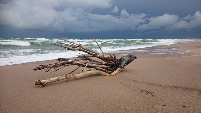 Photo gratuite transf rer plage bois flott image for Recherche bois flotte