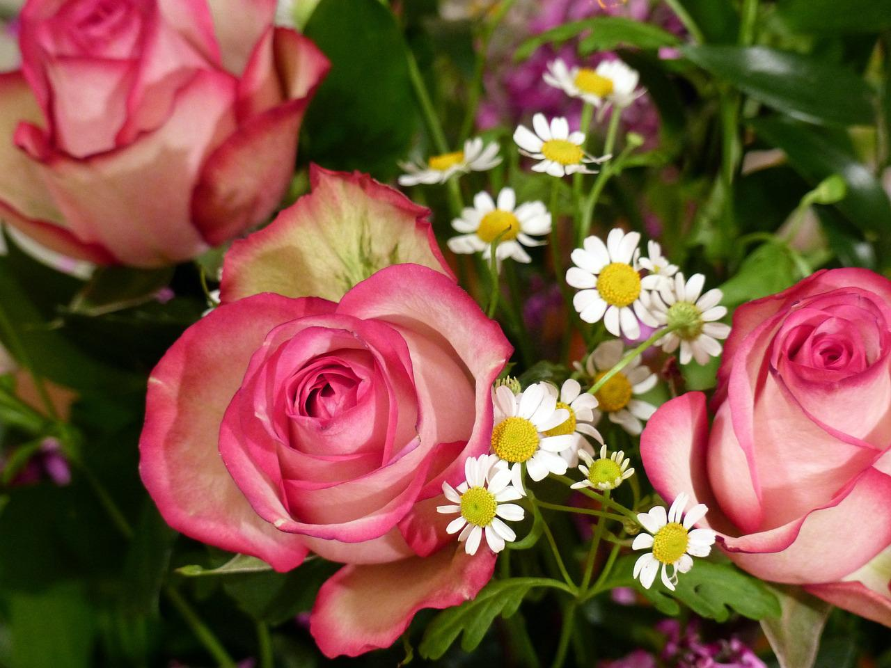 Цветы эквадор фото и названия