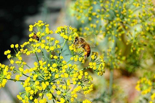 小さな花, 蜂, アリ, 黄色, 花粉, 受粉, 小, 花, 昆虫, 花柄