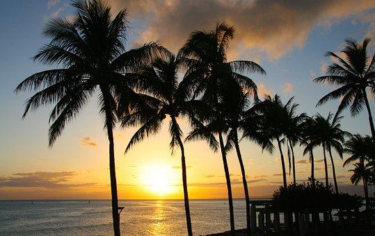 日没, パーム, 熱帯, 楽園, ホノルル, ハワイ, 公園, ワイキキ, 海