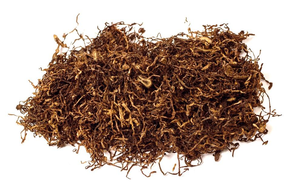 Названо новое время знакомства человечества с табаком