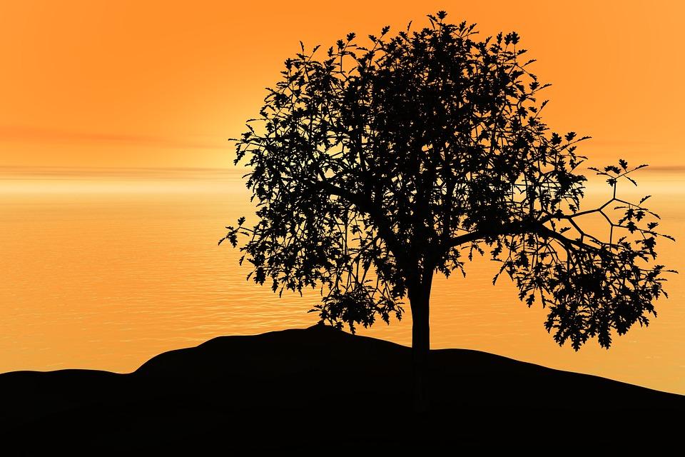 日落, 天空, 和平, 自然, 景观, 太阳, 日出, 景区, 查看, 风景, 夏天