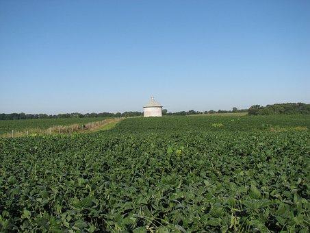 Soybean, Field, Silo, Farm, Rural