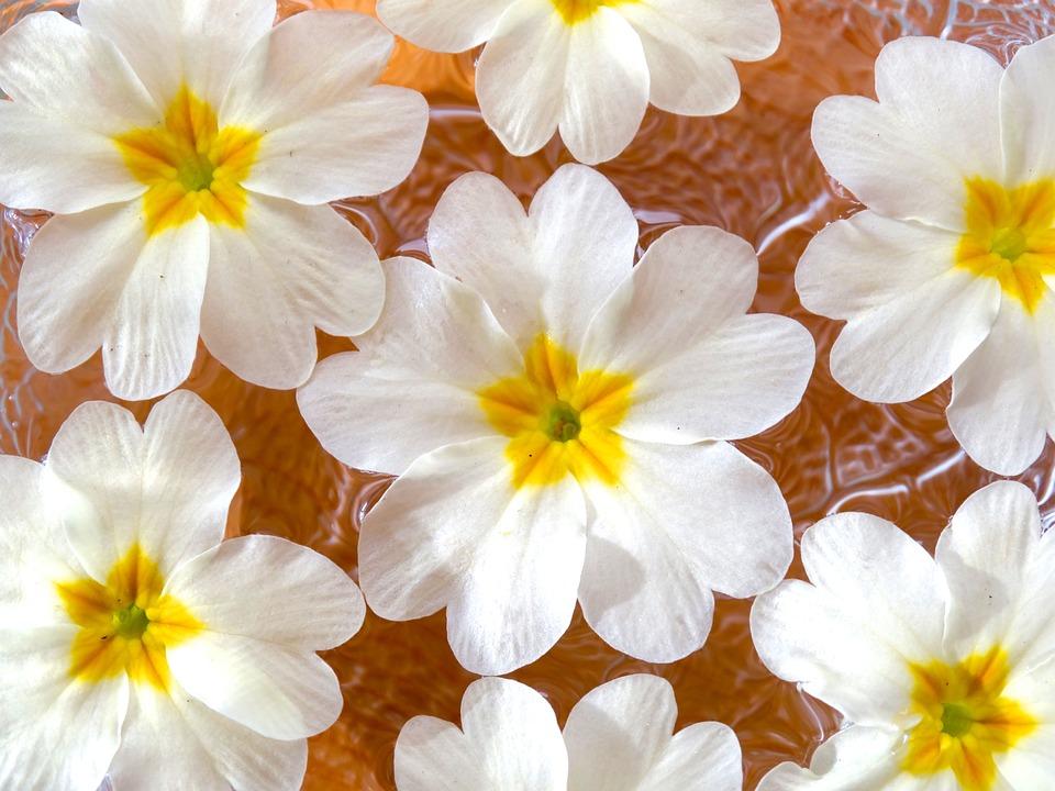 Fiori Di Primavera Sfondo Foto Gratis Su Pixabay