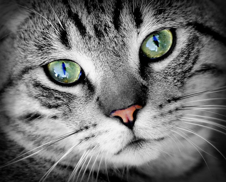 M Cats Eye