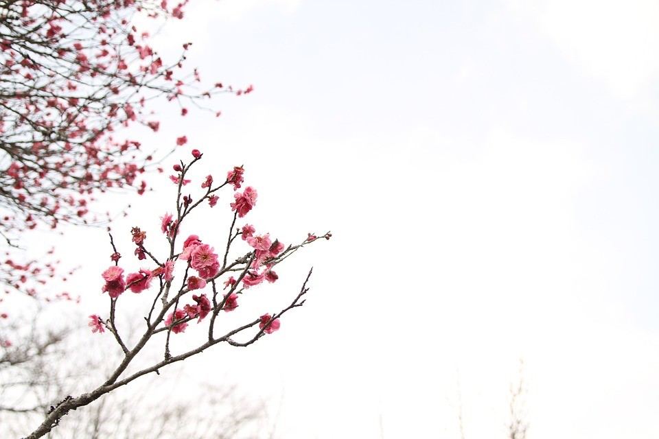 Free Photo: Japanese Peace Park, March