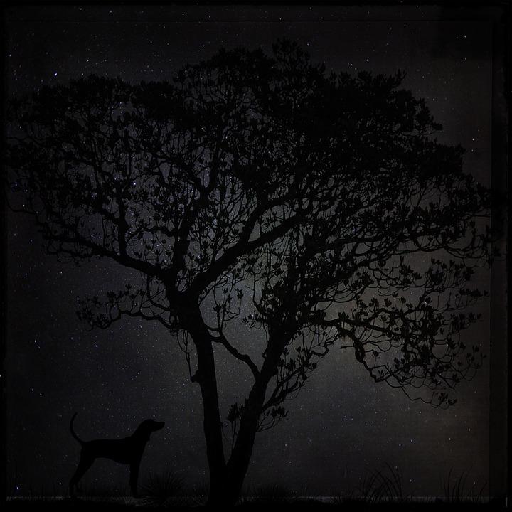 night-688067_960_720.jpg