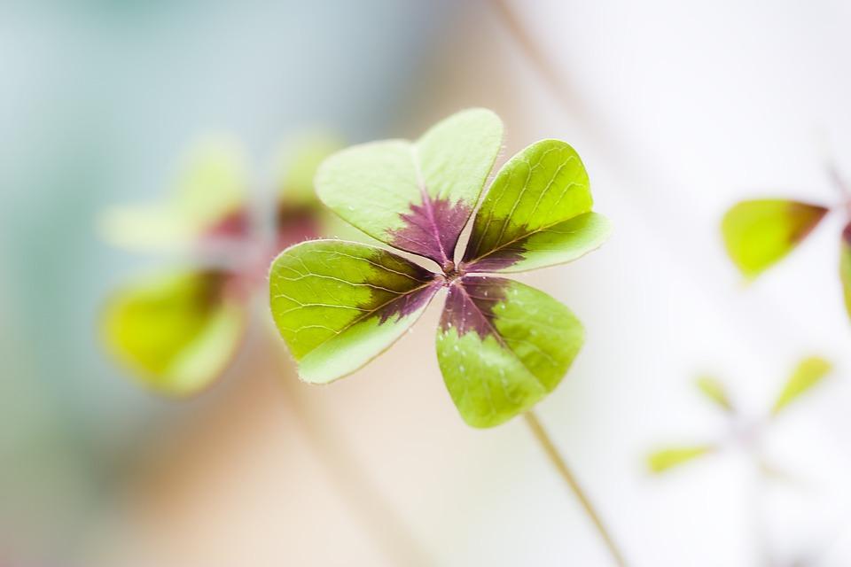 クレー, 幸運のクローバー, 運, 幸運のお守り, 緑, Shamrocks, 植物