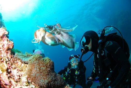 Diving, Underwater, Sea, Scuba, Diving