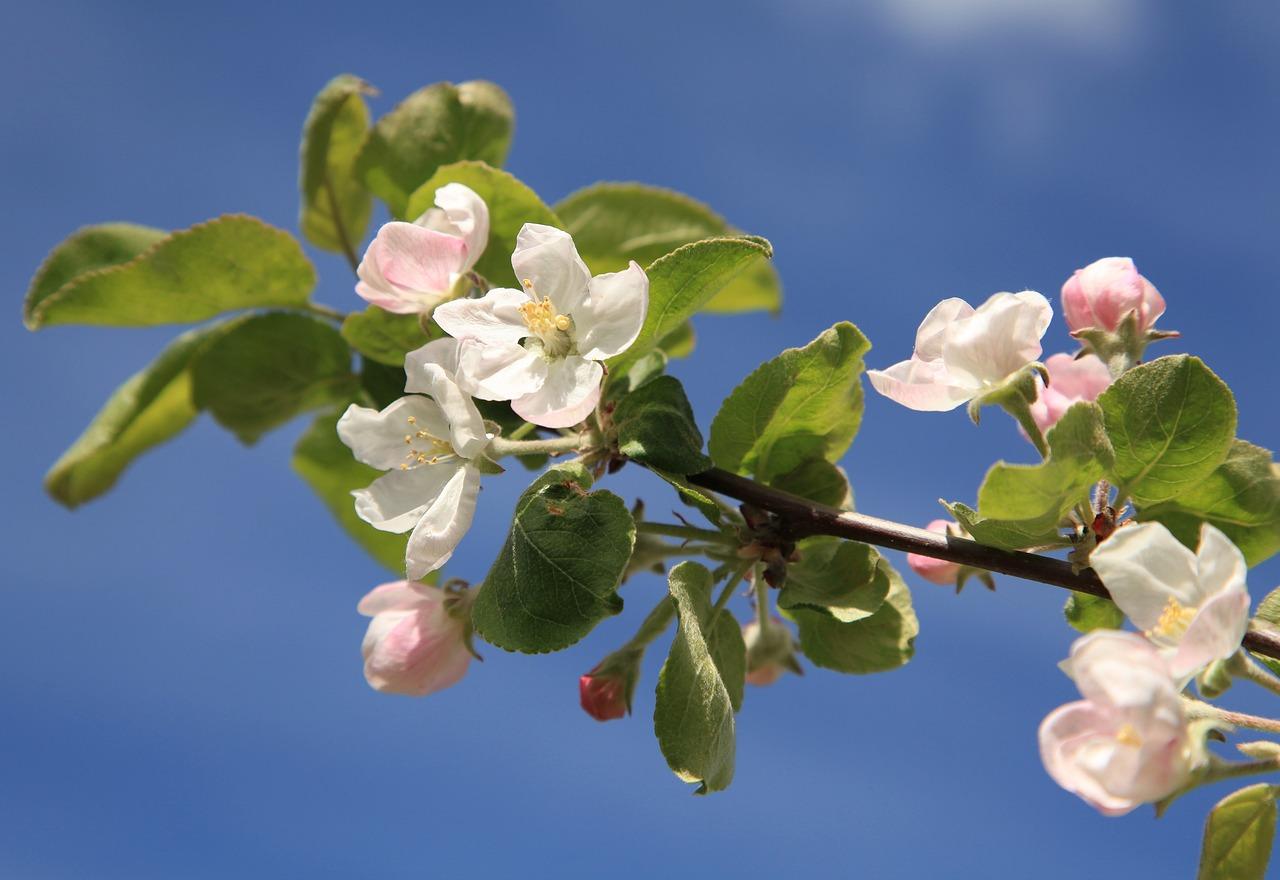 цветы яблоки листья картинки благотворительных организаций