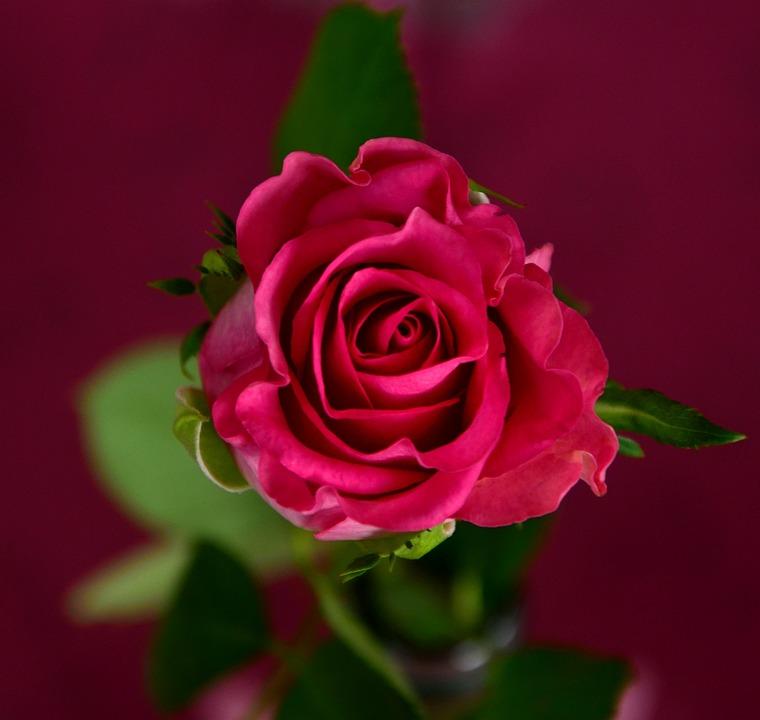 Vector gratis: Flores, Flor, Flores De Verano - Imagen gratis en ...