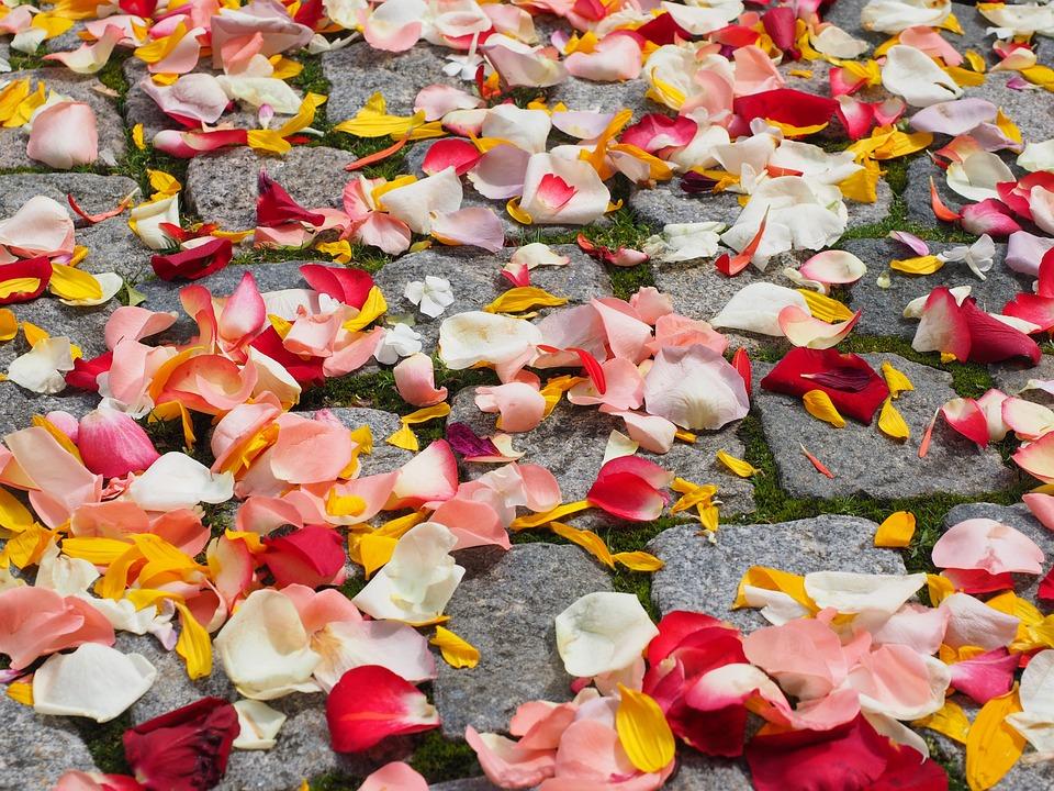 rose petals wedding free photo on pixabay
