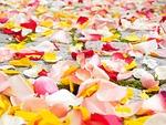 petals, wedding