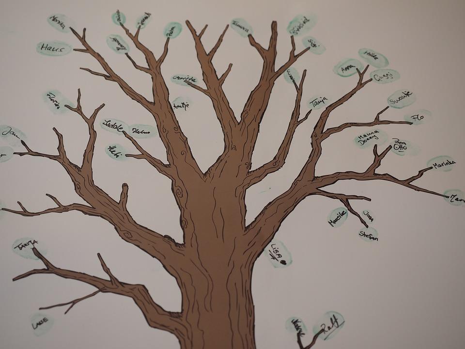 tree family branch  u00b7 free photo on pixabay
