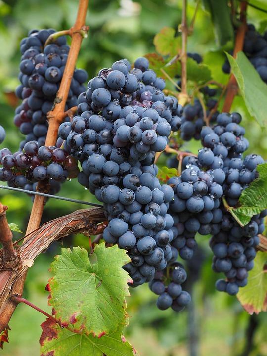 druer til vin