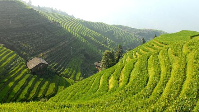 Free photo: China, Rice Terraces, Landscape  Free Image on Pixabay  694651