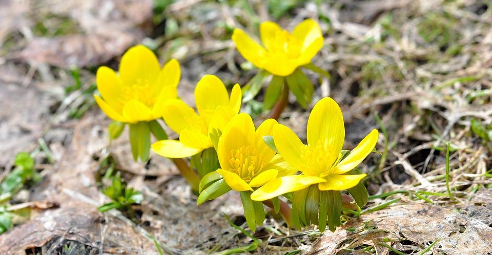 Linge D Hiver Fleurs Fleur Photo Gratuite Sur Pixabay