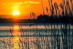 jezioro, trzciny, zachód słońca