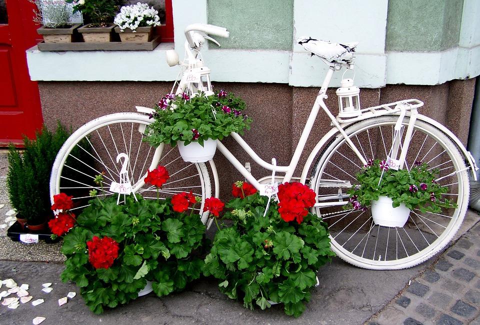 Zdjęcie do karty rowerowej