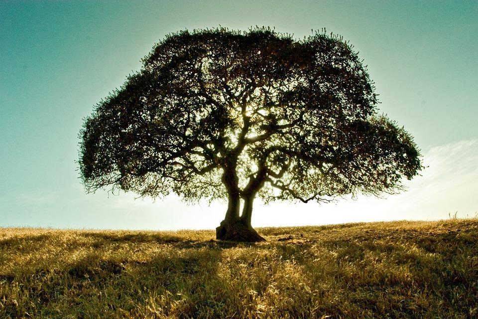 Árvore, Paisagem, Campo, Filiais, Ecologia, Brilhante