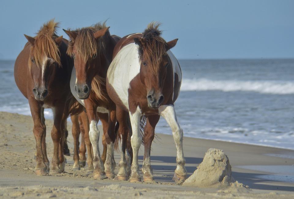 Free Photo Horse Beach Wild Ocean Sea Free Image On