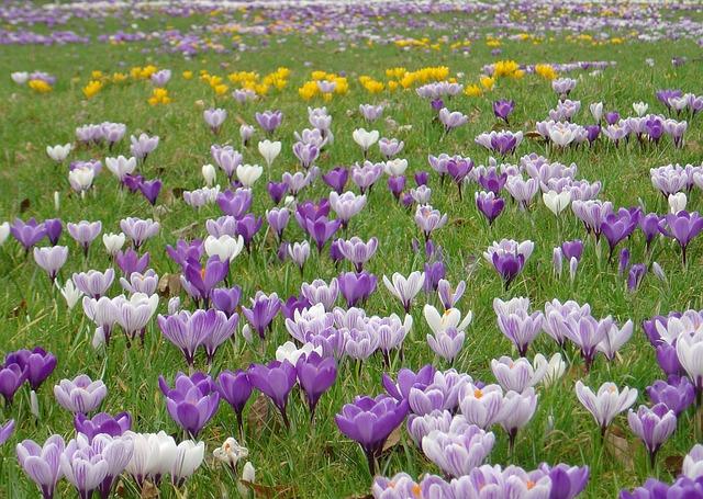 Croco fiore di campo primavera foto gratis su pixabay - Primavera uccelli primavera colorazione pagine ...