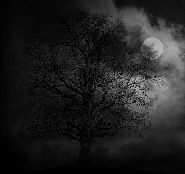 Free Photo Night Tree Moon Landscape Free Image On