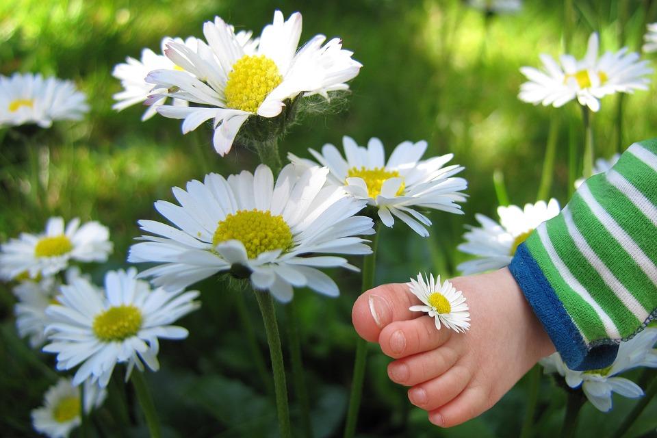 Fleur Marguerite Photo Gratuite Sur Pixabay