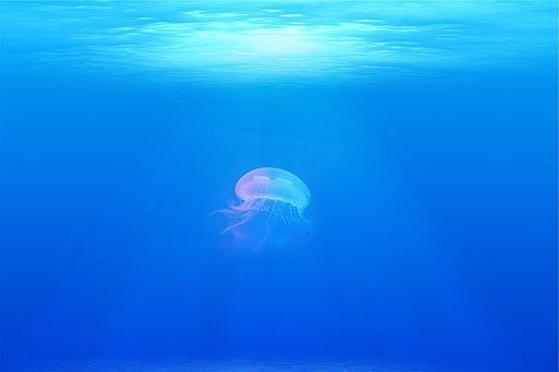 Jellyfish Under Water Sea Ocean Under Wate