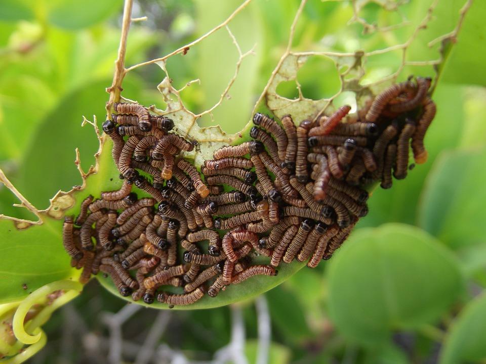 gusanos de plantas